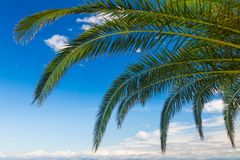 A palms leaves on the blue sky background. NBeautiful tropical summer view Stock Images