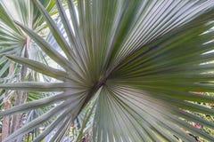 Palm leaf close-up stock image