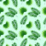 Palms leaves seamless pattern. repeat tropical background. template greenary wallpaper. Graphic design with Phoenix stock illustration