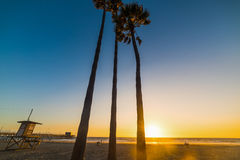 Palms and lifeguard tower in Newport Beach Stock Photo
