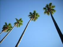 Palms line. High palm trees in a Mediterranean town, in a public garden near the sea Stock Photos
