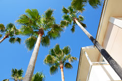The palms at luxury hotel Royalty Free Stock Photos