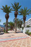 Palms in Marmaris Royalty Free Stock Images