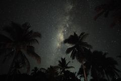 palms and the milkyway over Siargao, Philippines royalty free stock image