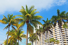 Palms and modern buildings of Miami Beach. Stock Image