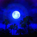Palms in the Moonlight Stock Photo