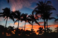 The palms in the morning. The beauty of the colors of sky during dawn as contrasted with the silhouettes of the palms royalty free stock image