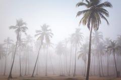 Palms in morning fog in Arambol, Goa, India Stock Images