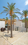 Palms at museum Es Baluard Museu d'Art Modern i Contemporani de Palma Stock Image