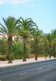 Palms. royalty free stock photos