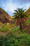 Palms near Masca village with mountains, Tenerife, Canarian Isla Royalty Free Stock Photo