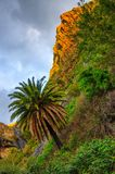 Palms near Masca village with mountains, Tenerife, Canarian Isla Royalty Free Stock Image