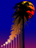 Palms at night. Silhouette of palms at tropical night Stock Images
