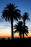 Palms in the Night. Montevideo Royalty Free Stock Image