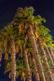 Palms in the night. Dark Sky Stock Image