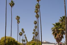 Palms and observatory in Hollywood Stock Photography