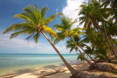 Palms and ocean Royalty Free Stock Photography