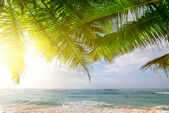 Palms and ocean at sunrise. Palms on Indian ocean at sunny morning, Sri Lanka Royalty Free Stock Photo