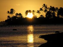 Palms and ocean at sunset in Hawaii Stock Image
