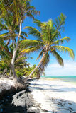 Palms On Beautiful Caribbean Beach Royalty Free Stock Images