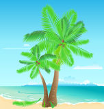 Palms On The Beach Stock Photography