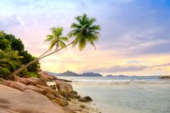 Palms over water. Scenic view of the coast of LaDigue Island, Seychelles Royalty Free Stock Image