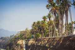Palms in Palisades park in Santa Monica Royalty Free Stock Image