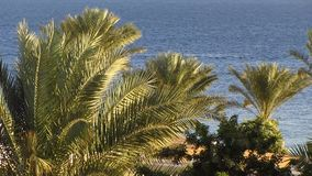 Palms. Palm trees on the background of the sea stock video footage