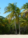 Palms. Palm trees crown the white sands of Playuelita an islet that is part of the Morrocoy National Park in the Falcón State in Venezuela Stock Photos