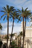 Palms in Palma de Majorca Stock Photos