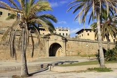 Palms in Palma de Mallorca. Palms near La Seu Cathedral in Palma de Mallorca, Spain Royalty Free Stock Photos