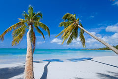 Palms on paradise island (caribe). Two coconut palms on white paradise beach with turquoise water (caribe royalty free stock photography