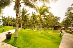 Palms park by beach green lawn stony paths park-lamps litter bin. Tropical palms park near beach with green grass lawn stony paths park-lamps and litter bin Stock Photo