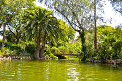 Palms in the park Ciutadella, Barcelona Stock Photography