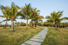 Palms in the Park, Shenzhen, China Stock Image
