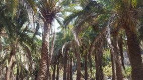 palms and palms stock photography