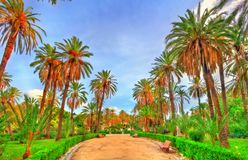 Palms in the Park at Villa Bonanno in Palermo, Sicily, Italy Stock Images