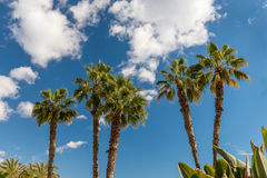 Palms on Paseo Maritimo Picasso East from Malaga Stock Photo