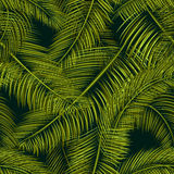 Palms pattern 1 Royalty Free Stock Photos