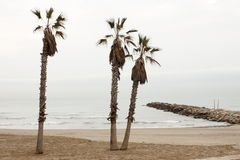 Palms and peak in winter Stock Images