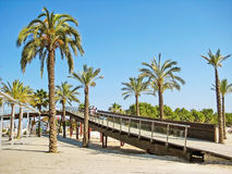 Palms with pier at beach in Alcudia, Majorca, Spain Royalty Free Stock Photography