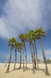 Palms and the pier at Santa monica beach Royalty Free Stock Photo