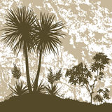 Palms, Plant and Abstract Background Stock Photography