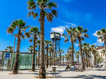 Palms on Plaza del Mar in Barcelona Royalty Free Stock Photos