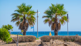 Palms in Poetto beach Royalty Free Stock Photo