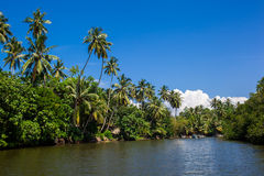 Palms and pond, Sri Lanka. Water canal in Sri Lanka, the tourist site Royalty Free Stock Photography