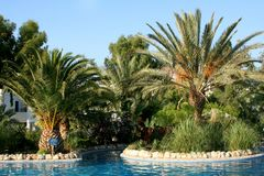 Palms and pool Stock Images