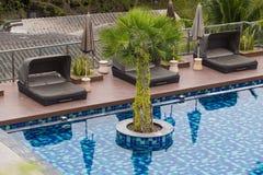 Palms Pool Sea  view Royalty Free Stock Image