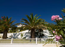 Palms and property. Palm trees on a boulevade with luxury property Stock Images