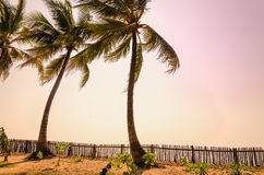 Palms and purple sky at sunset on exotic islands Stock Image